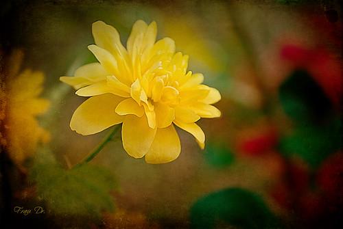Gartensichten in Gelb