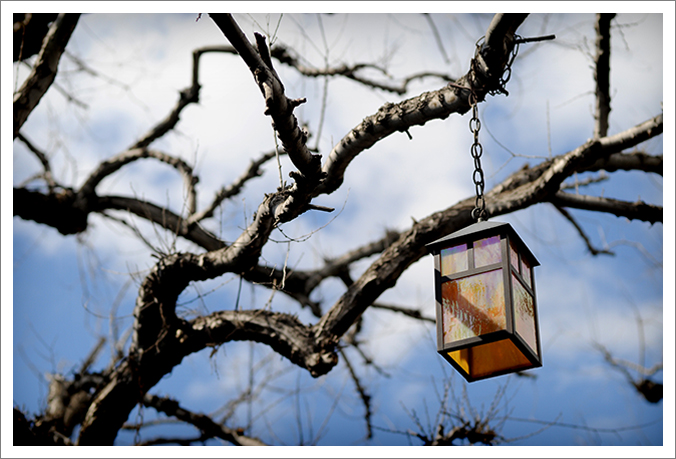 lamp in tree