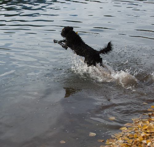 luna jumps in the lake