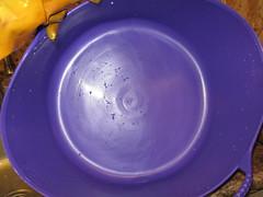 purpletub