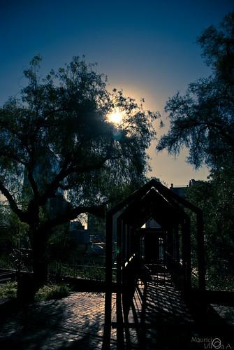 Sweet Backlight!. - 29/365