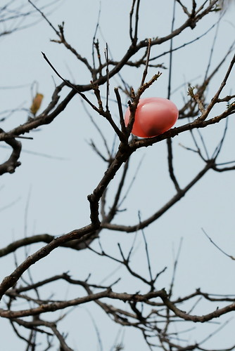 egg in a tree