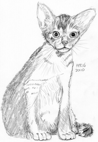 Cute kitten, drawn live on April 16, 2010