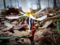 Sweet Memory of Spring