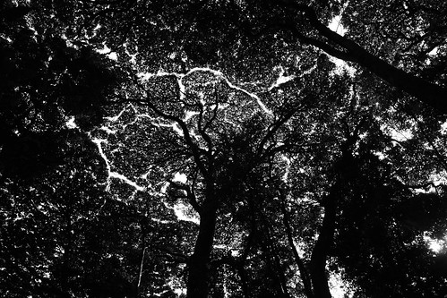 Nyungwe Forest Canopy
