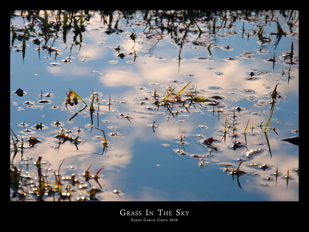 GRASS IN THE SKY