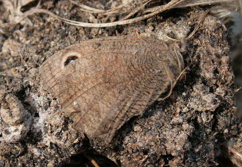 Dead butterfly in nestbox