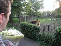 Wouter meets the alpaca