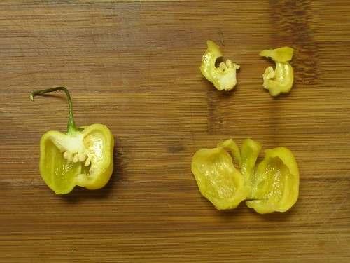 Pepper, disected