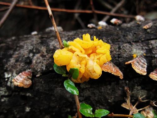 Chiquito Basin Mushroom Foray