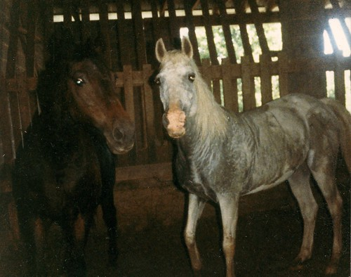 found horses