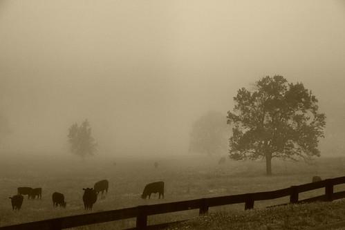 Moos in the Mist