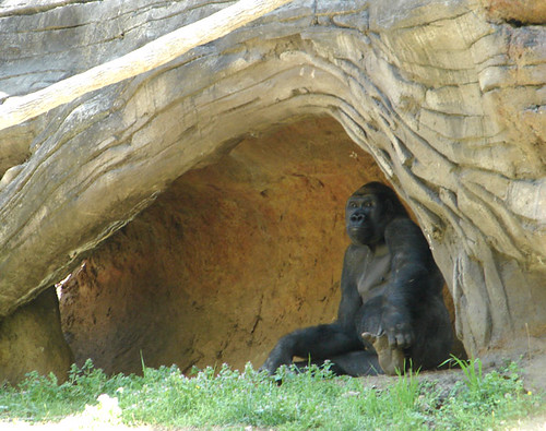 Gorilla13_ECU