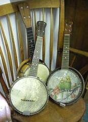 Banjo Ukeleles