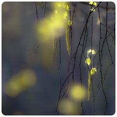 Springbound #55 (creation) by Lumase