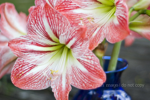 homegrown beauty 3