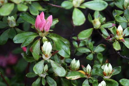 I think I'm overusing spring flowers 71/365
