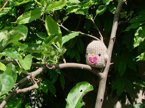 Lovely Birdie [Day 143/365]