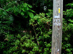 Bushes Palmettoes Utility Pole Numbers