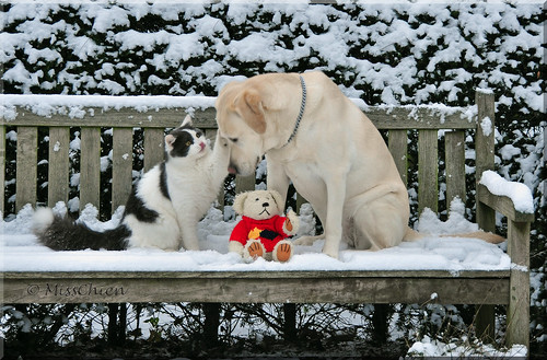 Let's play in the snow! by Miss Chien.