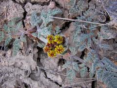 Hardy spring plants!