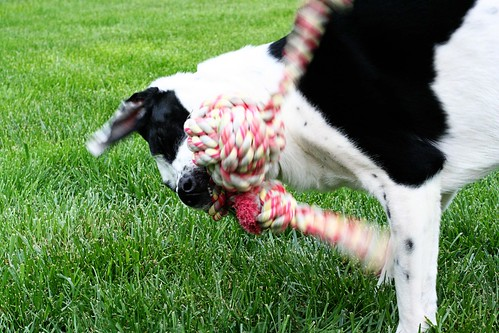 Chev and The Rope