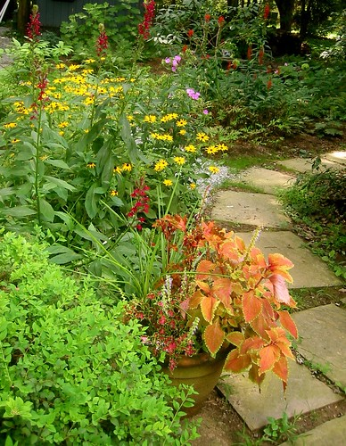 Garden at Sycamore Drive