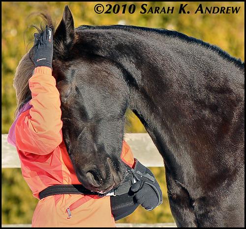 Horsey hug