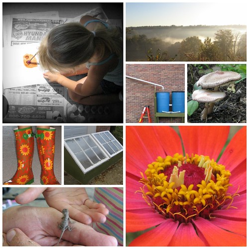 countrylife collage