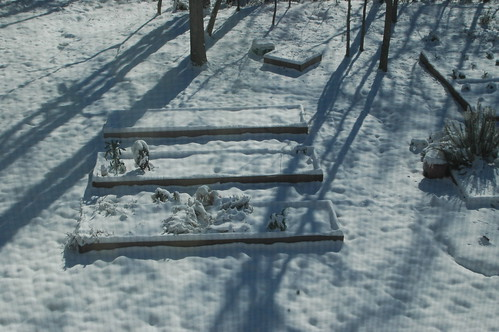 Snow in the Carolina Victory Garden 2010 Second Snow