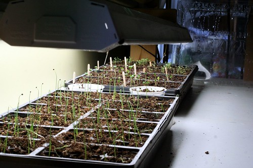 Seedlings on March 10