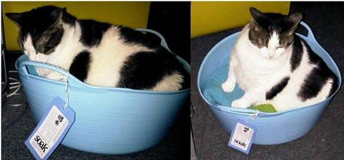 Property of Winnie Fat Cat