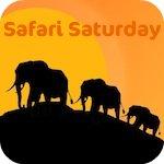 Safari Saturday