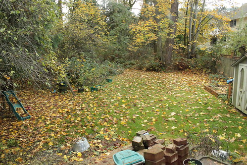 Time to rake leaves!