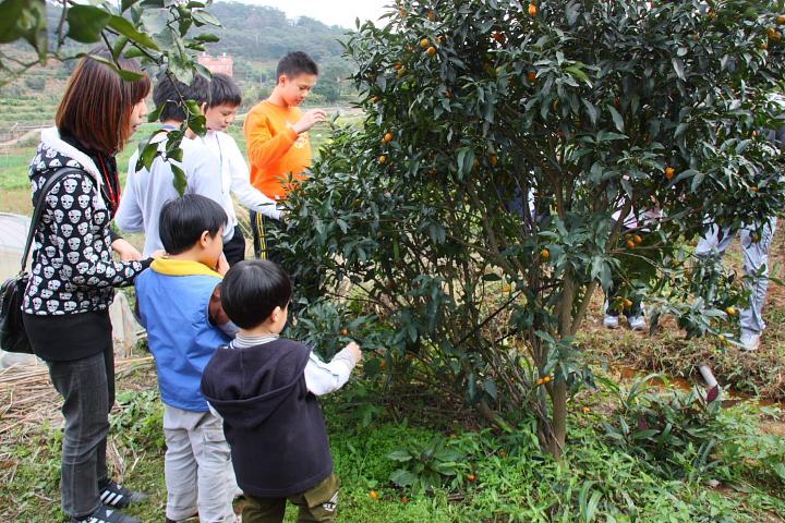 【好玩三芝】番婆林觀光花園(阿富農場)的多元體驗~ - 佑佑皮皮 in sina - 新浪部落