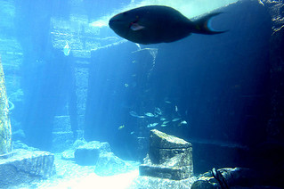aquarium at the atlantis