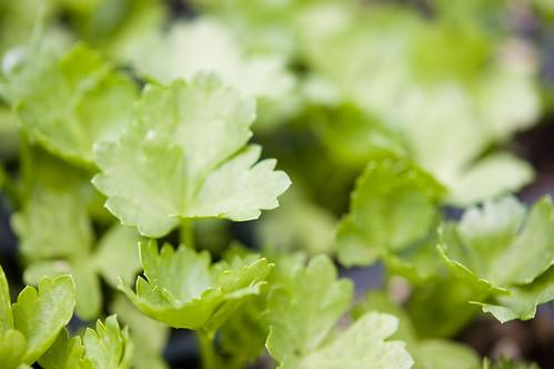 leafy greens (by bookgrl)