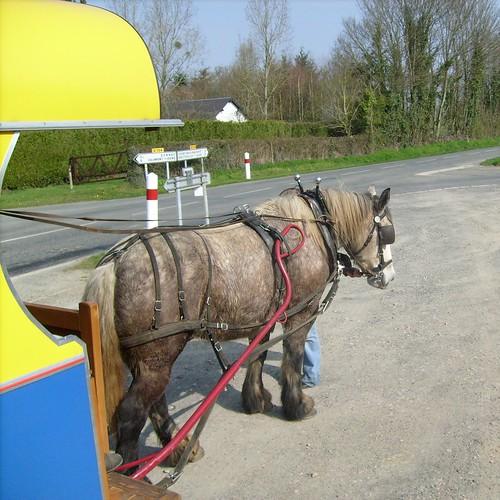 Cheval au travail / Horse at work