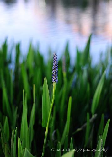 lakeside beauty no.2