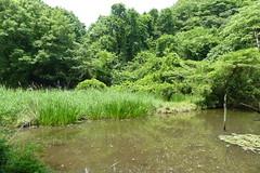 自然環境保全センター(Nature Preservation Center, Japan)