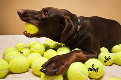 Tennis ball heaven