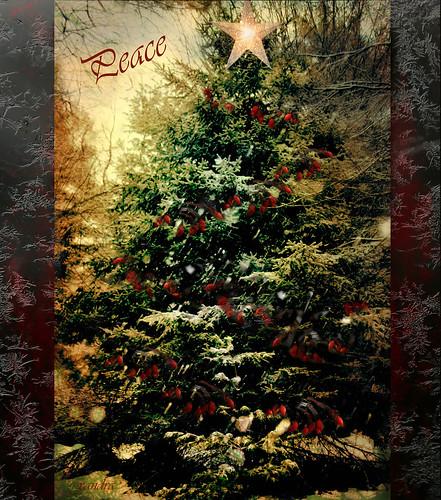 <<~~~ O Christmas Tree ~~~>> by xandram