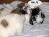 puppy fight
