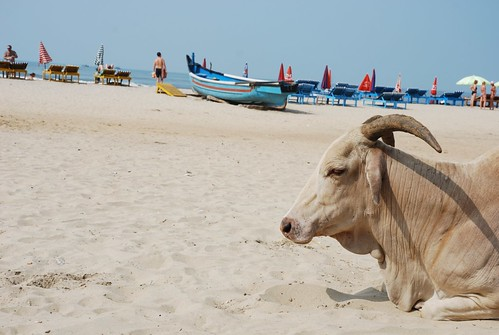 Bull_Beach