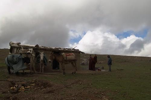Pastores buscando calor