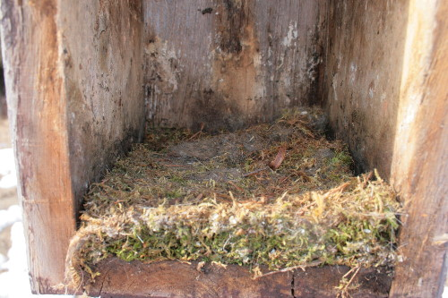 Chickadee nest in nestbox
