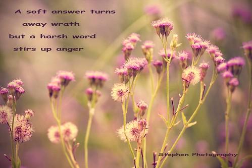 Proverbs 15:1*