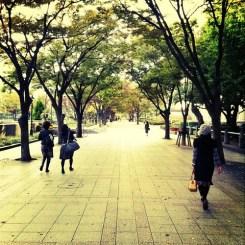 秋づく道を…