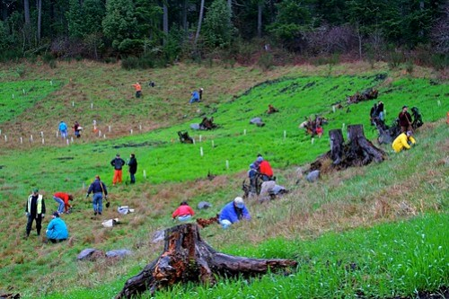 Island Center Forest planting