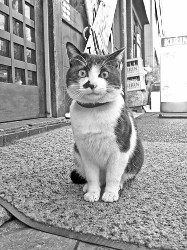 Haruki Murakami cat